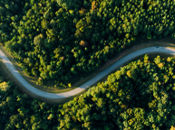 curvy road in woods seen from above